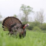 What Turkey Lovers Should Know About Turkey
