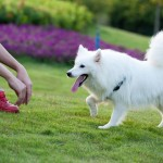 5 Ways to Apply Holistic Care to Your Pets