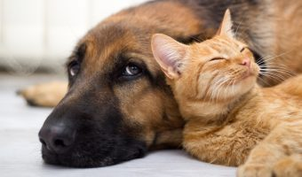 photo of cat and dog